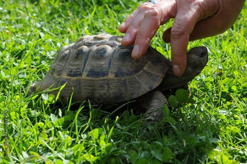 Aluminium Schildpad Zahme Schildkröte