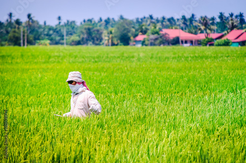 Fotobehang Gras Farmer working on paddy field at asia
