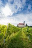 Vineyard in Austria - 191599577