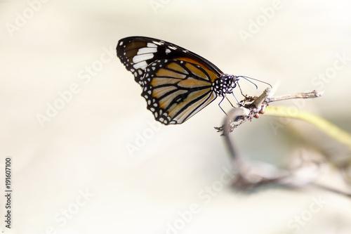 Aluminium Vlinder butterfly