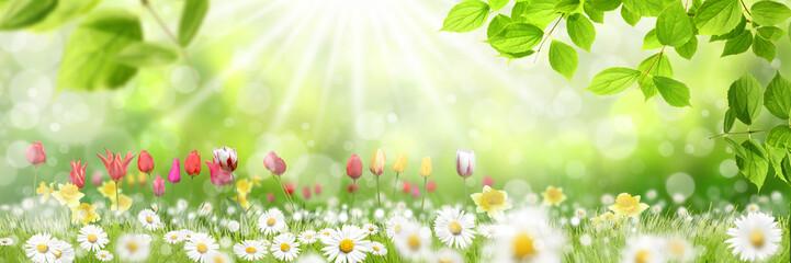 Frühling 428