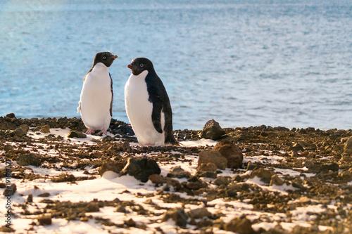 Fotobehang Pinguin A pair of adelie penguins, Ross Island, Antarctica