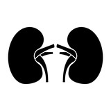 kidney medical healthy internal human organs vector illustration  - 191619178