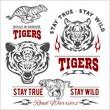 Tigers custom motors club t-shirt vector logo on white background. Wild animals - vector set.