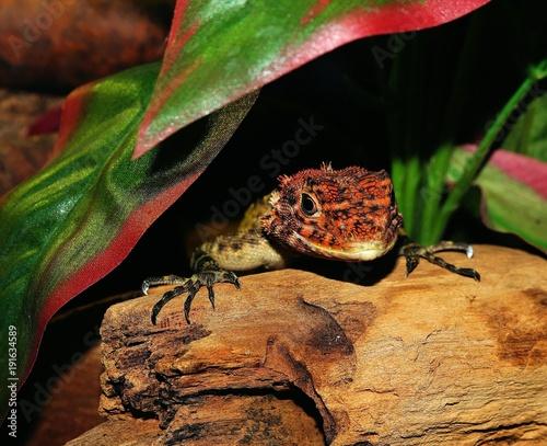Fotobehang Kikker frog, lizard, animal, nature, reptile, wildlife, amphibian