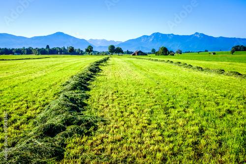 Tuinposter Lime groen european alps