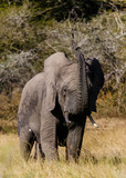 Elephant at play in South Africa - 191637933