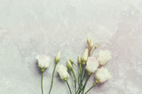 Prairie Gentian Flowers on Gray Marble (old styled flat lay arrangement) - 191638564