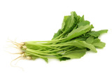 fresh turnip tops (turnip greens) on a white background