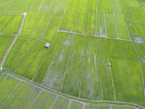 Aerial view from drone. rice plants in paddy field - 191656547