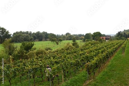 Foto op Plexiglas Wit Weinanbau an der Saale-Unstrut