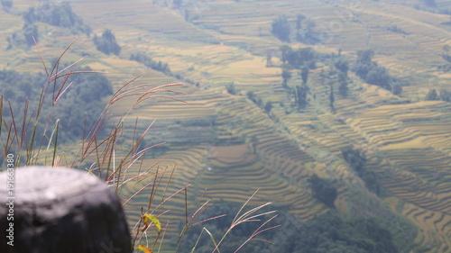 Foto op Canvas Donkergrijs yellow fields landscape