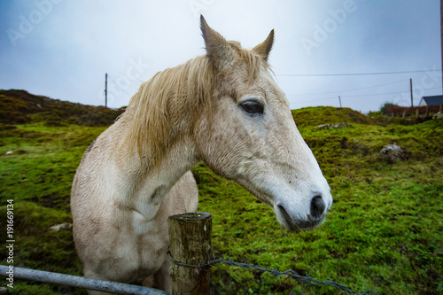 Aluminium Paarden White Horse on Irish farm