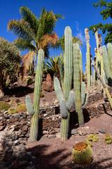 Cactualdea Park, Gran Canaria
