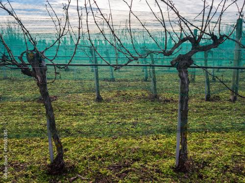 Aluminium Wijngaard Netz in den Weinbergen gegen den Vogel Star