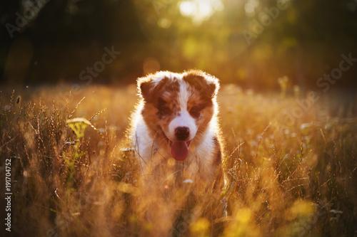 Foto Murales Cute little dog