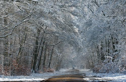 Foto op Canvas Donkergrijs Route forestière enneigée en forêt de Fontainebleau