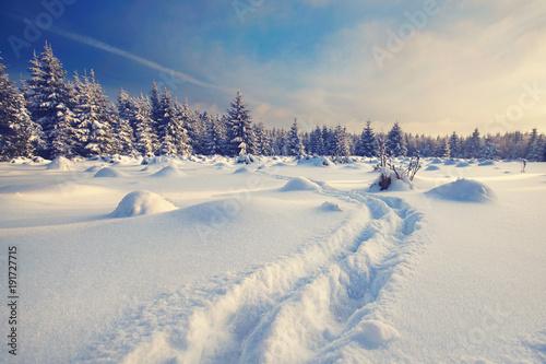 Tuinposter Weg in bos Abenteuer im Winterwald