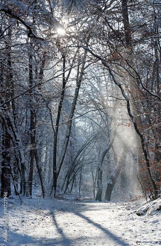 Sentier sous la neige en forêt de Fontainebleau