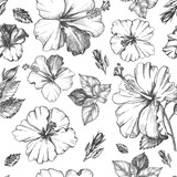 Decorative seamless pattern with ink hand-drawn Tropical hibiscus flowers and leaves. Vector illustration. - 191732554