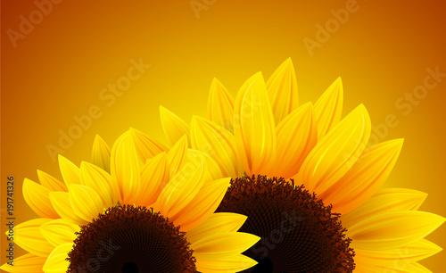 Sunflowers background, romantic flower vector background.