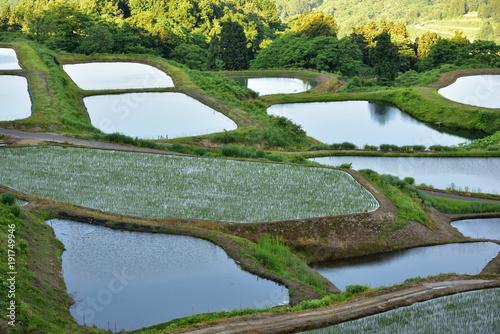 Aluminium Rijstvelden Terraced rice fields