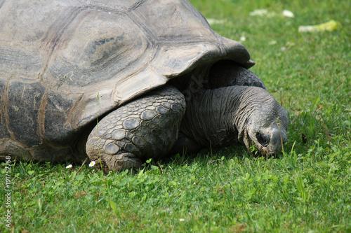 Fotobehang Schildpad Tartaruga