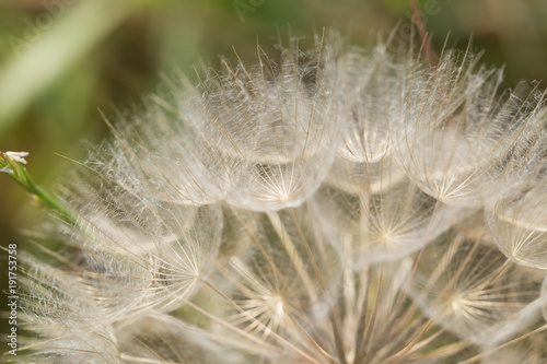 Fotobehang Paardenbloemen macro, meadow, flower,abstract,dandelion