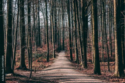 Fotobehang Weg in bos Forêt