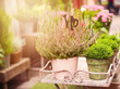 Spring gardening background with plants