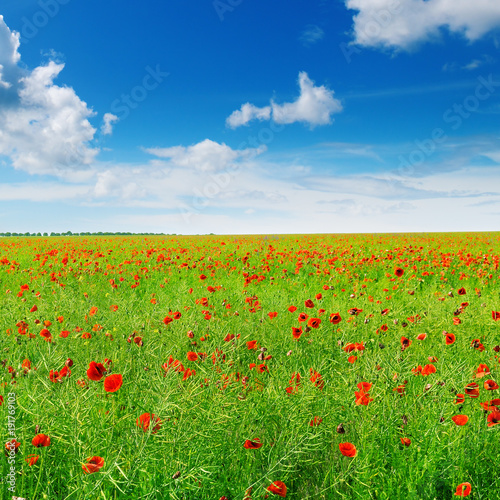 Fotobehang Klaprozen Meadow with wild poppies and blue sky.