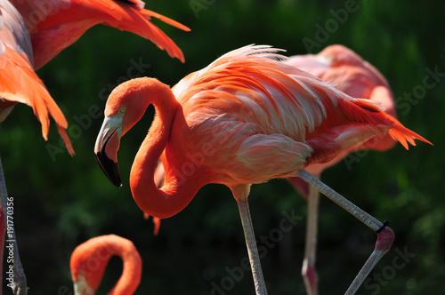 Foto op Plexiglas Toronto Flamingo in Toronto Zoo