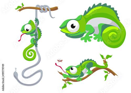 Fototapeta Vector illustration of chameleon isolated on white background