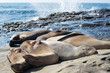 Sea lions sleeping on the rock with sea background.
