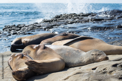 Fotobehang Lion Sea lions sleeping on the rock with sea background.