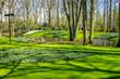 Quadro Green grass in the keukenhof gardens at Lisse, Netherlands, Europe
