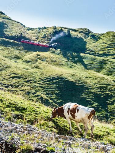 Zahnradbahn auf das Brienzer Rothorn und Kuh am weiden im Berner Oberland, Schweiz