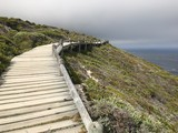 Küste, Südafrika, Steg, Kap der guten Hoffnung, Kap, Meer, Horizont - 191795510