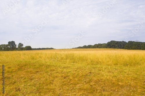 Fotobehang Zomer Yellow field and sky