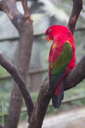 Fotobehang Kuala Lumpur Red parrot