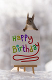 Red squirrel on a happy birthday sign - 191819910