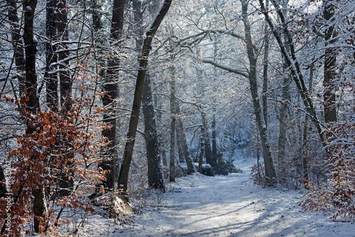 Aluminium Chocoladebruin Sentier du bas breau en forêt de Fontainebleau