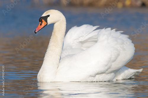 Aluminium Zwaan Mute Swan