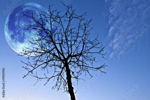 fantasy-concept-composed-by-a-big-shining-moon-and-a-black-tree-in-winter