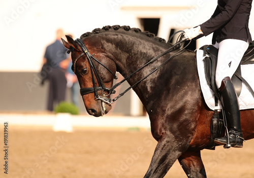 Aluminium Paarden Horse in close-up in the dressage competition at the tournament course..