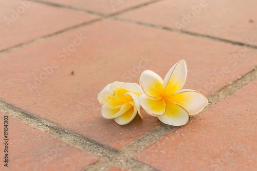 Fotobehang Plumeria plumeria flower drop on the foot bath