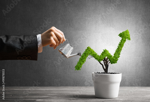 concept-of-investment-income-and-growth-with-tree-in-pot