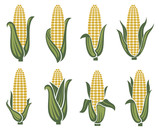 collection of corn ear images - 191889780