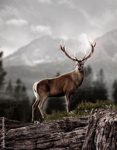 Foto Murales deer in wildness_photo-manipulation