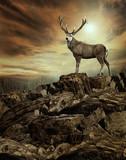 deer in wildness_photo-manipulation   - 191895570